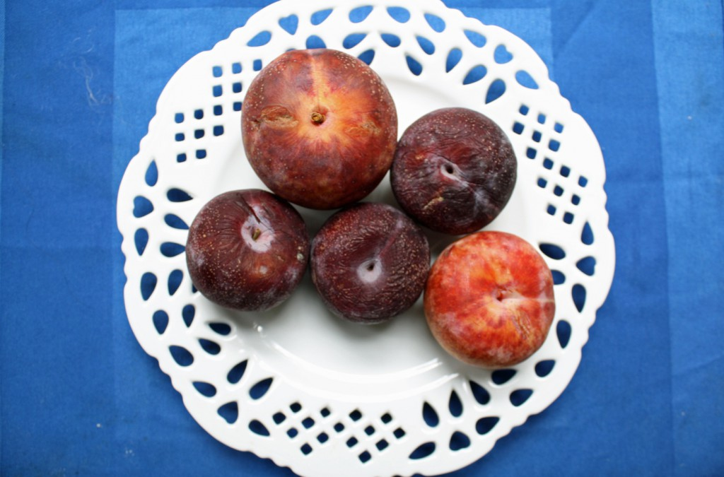 Recipe: Pluot Clafouti