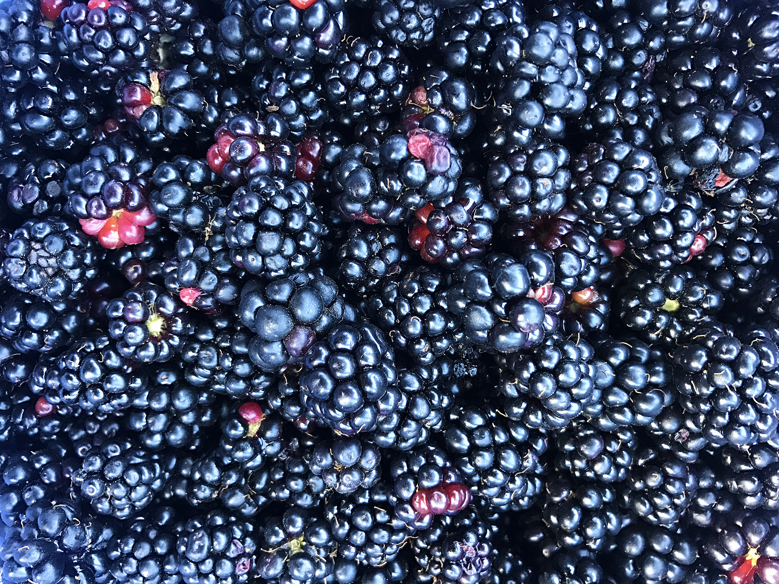 Recipe: Wild Blackberry Jam // Shikha la mode