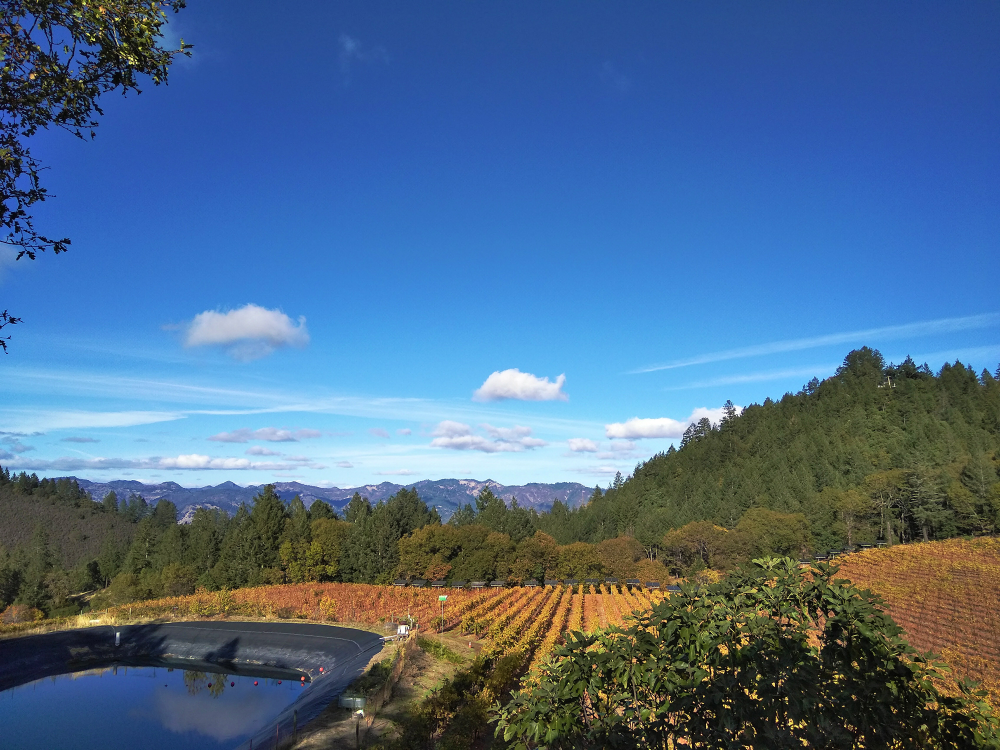 Weekend Trip: Napa Valley with a Side of Calistoga // Shikha la mode