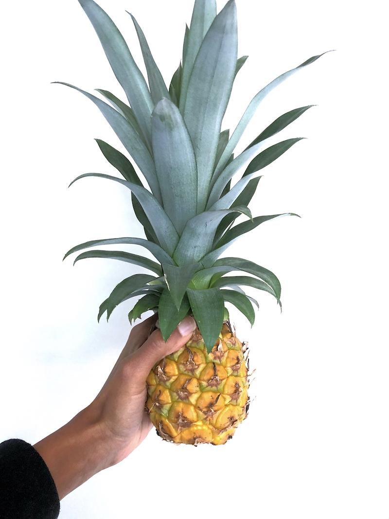 Home grown indoor pineapple - 2019 recap