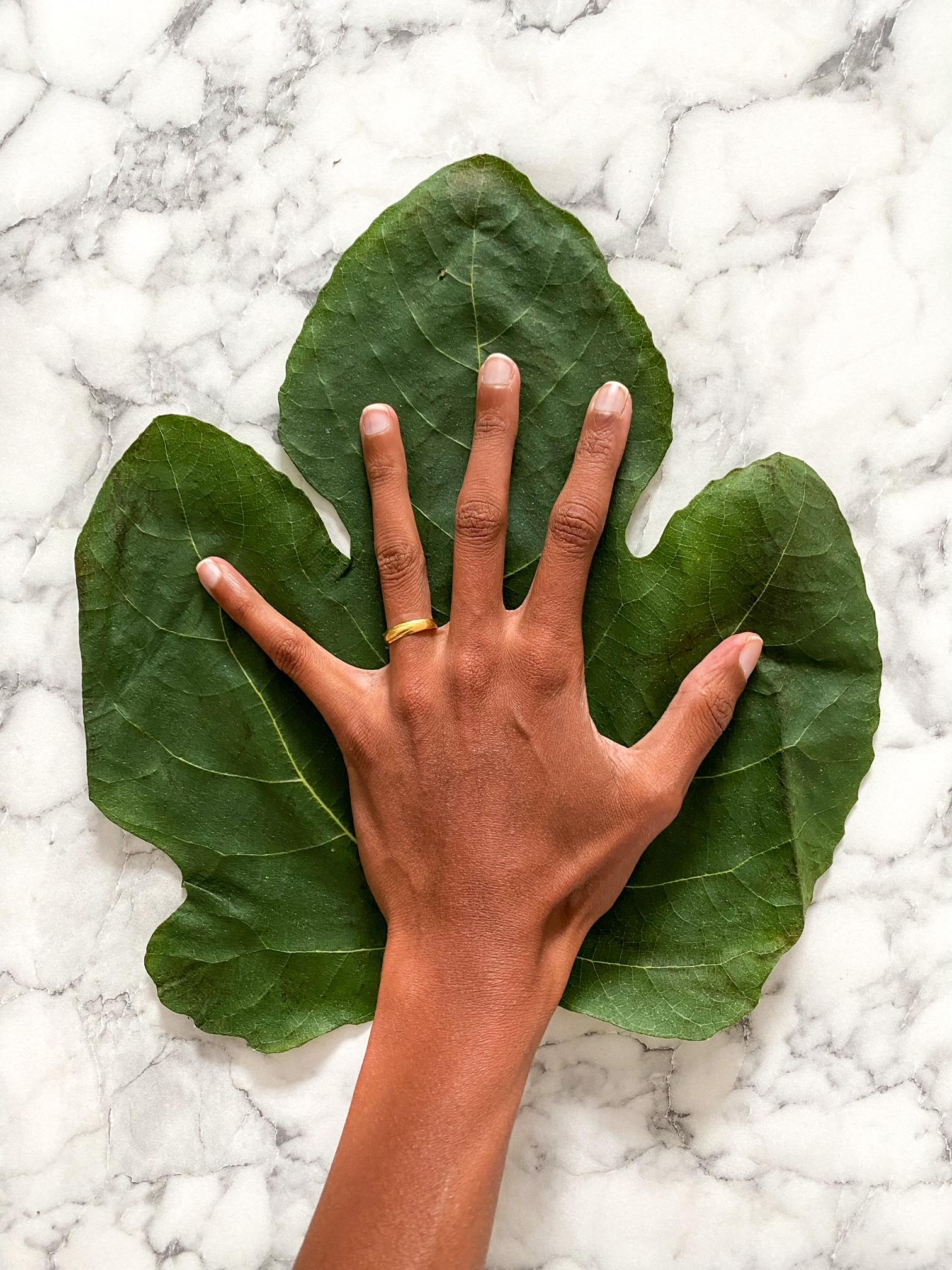 giant fig leaf